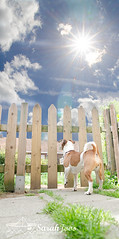 Dobby (Sarah Joos) Tags: distortion sunshine clouds fence garden wideangle terrier sunburst jackrussel starburst sunflare bracketing