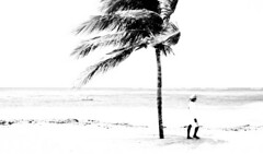 Beachworld (WestCoasting) Tags: ocean tree beach monochrome cuba palm guardalavaca humanelement