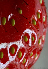 Strawberry (Vanessa Kennedy) Tags: red macro reflection yellow fruit strawberry shiny dof shine seed strawberries pips pip