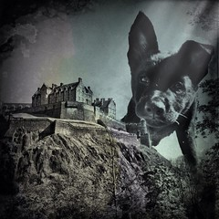 [ the investigator ] #amptchat #photo #montage #EdinburghCastle & my #puppy #handyphoto #lenslight #picfx (jess1fer) Tags: puppy photo edinburghcastle montage handyphoto lenslight picfx uploaded:by=flickrmobile flickriosapp:filter=nofilter amptchat