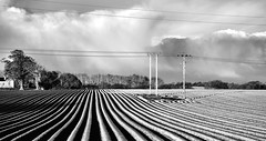 Leading Lines (fidget65) Tags: trees light bw lines clouds shropshire rows wires fields pylons furrows crosshouses