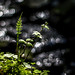 Zarte Natur 141/365