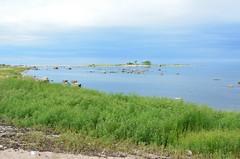 Purekkari neem (anuwintschalek) Tags: sea summer beach strand see nationalpark meer estonia sommer july baltic cape peninsula ostsee rand meri itmeri eesti kste lahemaa suvi estland neem landzunge 2013 18200vr rahvuspark lnemeri d7k poolsaar purekkari nikond7000 prispea