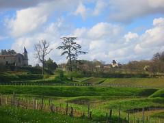 9670821374 85e0cb75f7 m 2013 Bordeaux Images Photographs Chateau Owners Wine Food Life