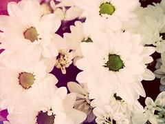 (mooohr) Tags: flowers flower fiori effect colori bianco amore luce lomofilter filtro oscurit sfumature effetto