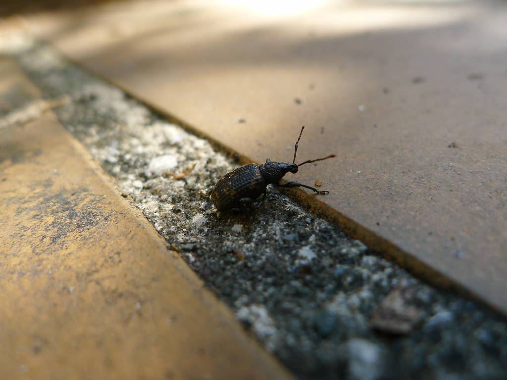 The Worlds Best Photos Of Insect And Tile Flickr Hive Mind - J mike carrelage