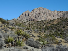 Spirit Mountain (Bogger44) Tags: cactus nature sunshine landscape nikon day desert nevada sage granite wilderness monolith laughlin rugged spiritmountain newberrymountains p510