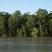 Florestas de mangue intocadas