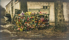 After The Funeral (Ghost Of Nations Photography And Digital Art) Tags: flowers trees flower loss cemetery graveyard dumpster dark garbage moody gloomy sad creepy crate graceland atmospheric gracelandcemetery ghostofnations ghostofnationsphotography