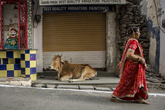 Last Minute Winks (leif.gunnar.boman) Tags: street ladies red woman india lady female photography cow nikon women streetphotography holy females rajasthan udaipur holycow d7100 nikond7100