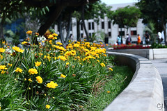 Amarillas (Martn Crdova Japay) Tags: flowers yellow relax bush day gray