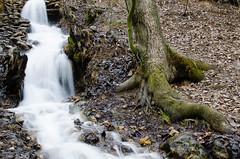 ...  (Esmaeel Bagherian) Tags: tree water nikon    2015  1393  18105mm  d7000  ebagherian esmalbagherian esmailbagherian