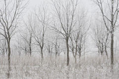 White Fantasia (Renata Lenartowicz) Tags: trees winter fros