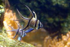 Aquarium de Paris  (8) (Mhln) Tags: paris aquarium requin poisson trocadero poissons meduse 2015 cineaqua