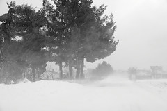 la bufera (rino_savastano) Tags: neve inverno freddo vento bufera campobasso