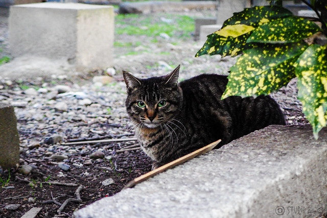 Today's Cat@2015-03-14