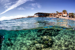 Lighthouse Bay, Dahab - Egypt (Day Is Coming) Tags: blue fish seascape coral happy nemo dahab redsea egypt diving clownfish sinai overunder underwaterphotography ikelite jacquesdevos