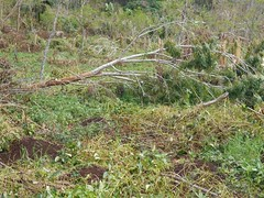 Yam garden (FAOemergencies) Tags: storm farmers agriculture cyclone fao vanuatu damages emergencies tropicalcyclonepam