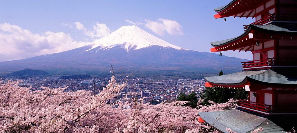 Du lịch Nhật Bản ở thời gian này, du khách sẽ có cơ hội tham dự Lễ hội Hoa tử đằng