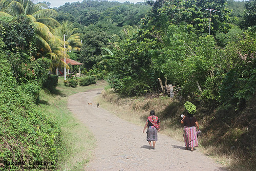 Strong neck - Pradera del quetzal - Guatemala