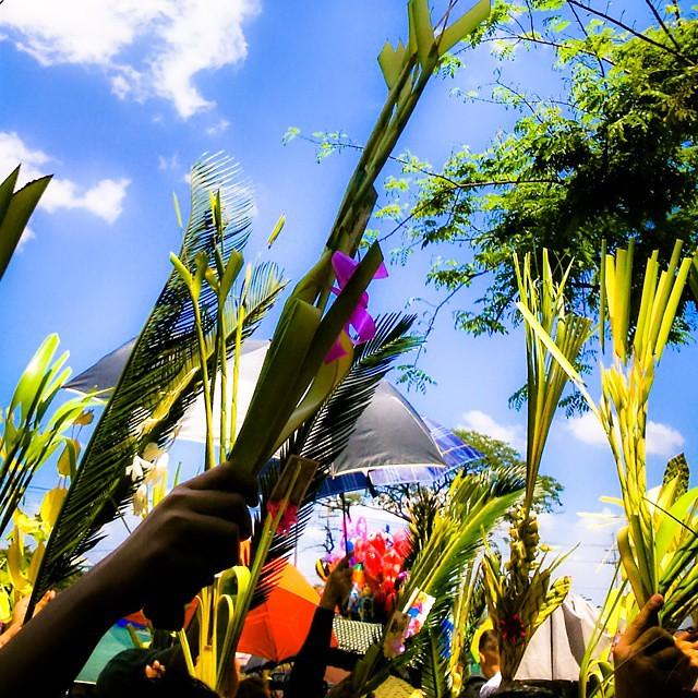Have a blessed Palm Sunday everyone! #picoftheday #pictureoftheday #igersmanila #philippines #itsmorefuninthephilippines #filipino #pinoy