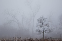 Appearances (JTPhoto2010) Tags: morning trees winter mist nature fog mystery forest woods hike atmospheric