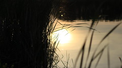 Reflect on This (Branson Rose) Tags: sunset reflection nature water beautiful grass sunrise dawn weeds pretty crystal dusk reflect