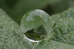 hailstone (Mark Schlicht) Tags: water hail drop droplet hailstone
