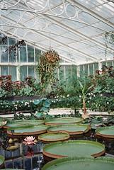 Victoria (RoYaLHigHnEsS1) Tags: park kewgardens plant color canonav1 green london film leaves richmond palm iso greenhouse 200 agfa
