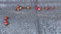 Some birds were having dinner (nofrills) Tags: red green nature fruits fruit season cherry urbannature