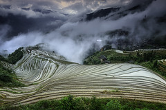 The rice fields in Longsheng. (Massetti Fabrizio) Tags: china fog clouds rural landscape landscapes rice terrace guilin fields cina longsheng