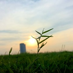 #photography #lumiaphoto #lumiaphotography #ilovephotography #shotonmylumia1520 #lumia #lumia1520 #shotonmylumia #grass #sun #grasses #sunset #sunshine #sky #bluesky (Kunal-Chowdhury) Tags: sunset sky sun grass sunshine photography bluesky grasses ilovephotography lumia instagram ifttt lumiaphotography lumia1520 lumiaphoto shotonmylumia shotonmylumia1520