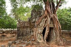 DSC_7181 (Omar Rodriguez Suarez) Tags: tree arbol temple cambodia angkor camboya
