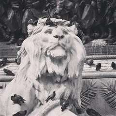 TheKing (lucasangarola) Tags: theking lion statue pigeons pigeon blackandwhite king