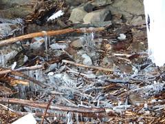 DSCN3713 (shelly_tichy) Tags: frosty february ohiopyle