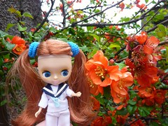 Quince Flowers! 119/365 (Bebopgirl1969) Tags: flower quince petiteblythe sailingsailing