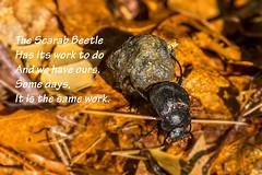 Scarab Beetle Poster (Jim Dollar) Tags: sc southcarolina posters scarabbeetle indianland jimdollar canon6d