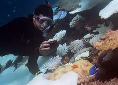 Lars holding his breath (dfinney23) Tags: dfinney23 2016 maldives snorkeling underwater fish anemonefish anemone coral sea blackfoot powderblue surgeonfish
