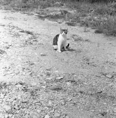 8260.Cat (Greg.photographie) Tags: nikon nikonfe nikkor 50mm f18 film analog foma 100 fomapan r09 noiretblanc bw blackandwhite cat chat grigri mistigri