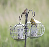 IMG_8409 (Mal.Durbin Photography) Tags: nature birds fauna wildlife insects naturereserve newportwetlands maldurbin goldcliffnewport