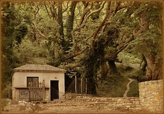 El bosque  (jose luis naussa ( + 1,8 k w. )) Tags: naturaleza bosques portaria     saariysqualitypictures vividstriking  grecia