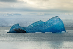 _DSC8820-Edit.JPG (bm.tully) Tags: ocean travel blue sea sky snow cold reflection bird ice nature water beautiful clouds landscape is iceland spring amazing melting outdoor sony lagoon glacier east polar icy jkulsrln ringroad 2016 a7ii sonya7ii