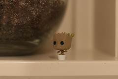 148:366:2016 (chrisjtse) Tags: 366 2016 groot toy figurine auckland marvel guardiansofthegalaxy