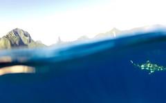 French Polynesia - 225 (- Adam Reeder -) Tags: french polynesia pacific ocean spring summer 2016 scuba diving travel adam reeder world frenchpolynesia tahiti moorea tahaa rangiroa fakarava borabora raiatea huahine society tuamotu islands sea beach photography photos flickr awesome photo cool spectacular water wwwadammreedercom adamreeder coconutbarometer kk6gpv personal wwwkk6gpvnet areed145