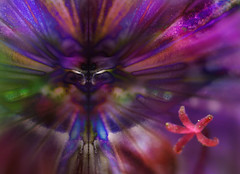 the invitation (pete ware) Tags: abstract flower macro face photoshop mirror petals alien kitlens difference layers nik organic pollen stigma extensiontubes blendmode nikon1855dxvr nikond7000 peteware