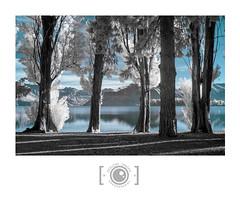 Wanaka False Colour (Dervish Images) Tags: trees newzealand lake landscape ir infrared wanaka 720nm dervishimages fujixe1 russdixon