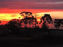 Fire sky (Gylzinha (=) Tags: fire sky orange cu sunset araucria contrast nature