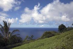 WaipioView (AZDropTop) Tags: ocean view valley waipio