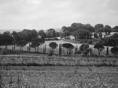 CRW_7482-1 (03TTAM) Tags: bw landscape toscana paesaggi viafrancigena