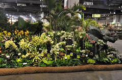2016-03-11_0279n_waldor (lblanchard) Tags: orchid waldor displaygarden 2016flowershow